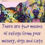 Quote: Dog and Cat