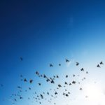 Prayables  Blog: Miracle of Flying
